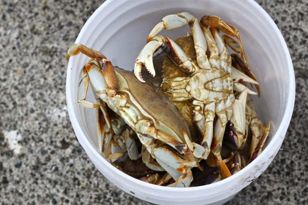 sexdeathrocknroll-crabs-bucket